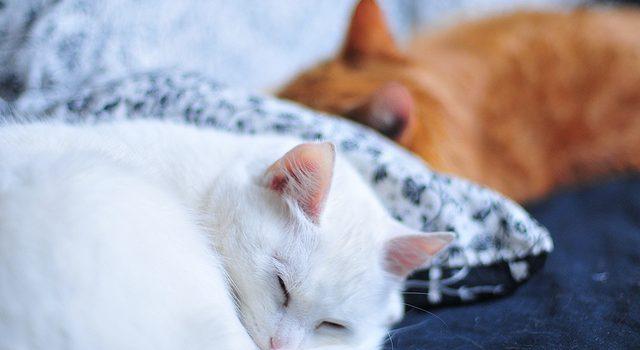 Understanding Your Cats Sleeping Pattern