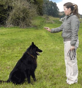 Clicker Training A Dog